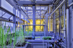 NYU - Genomics Greenhouse featured image