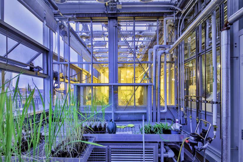NYU – Genomics Greenhouse