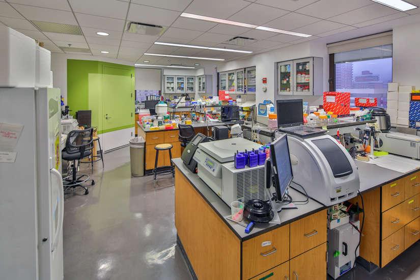NYU – Dental Laboratories
